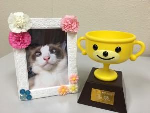 猫ぶちゃかわ部門優勝作品